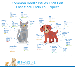 Pet Insurance Health Issues